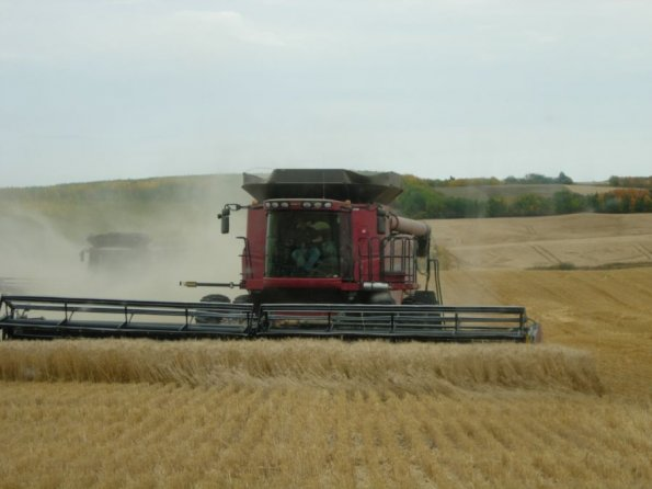 carlson-harvesting-photo10_jpg_595