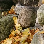 Stone Wall and Leaves