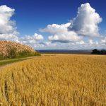 Fields of Ven