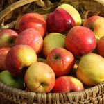 Apples basket cornucopia