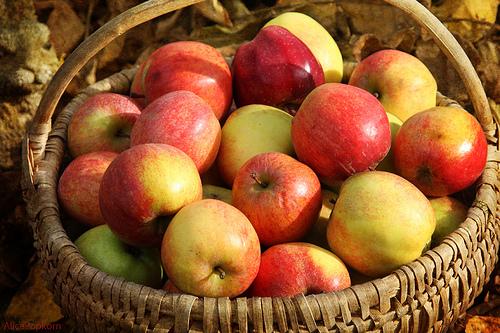 Apples basket cornucopia
