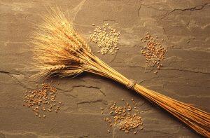 Wheatsheaf.USCA.cc